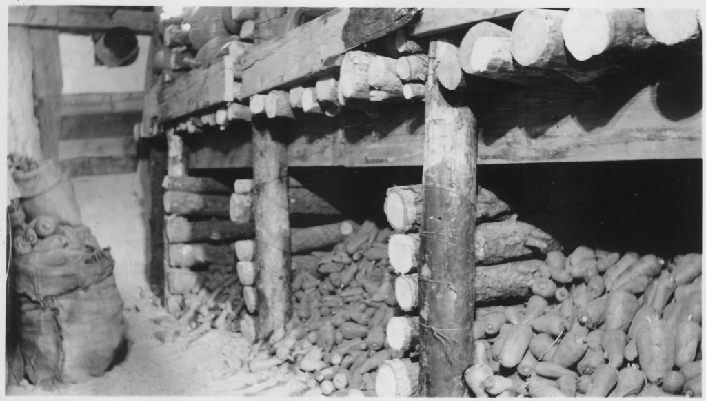 CCC_Camp_BR-83_North_Platte_Project,_Veteran,_Wyoming,_-Experimental_Plots-,_vegetables_stored_in_root_cellar._-_NARA_-_293597