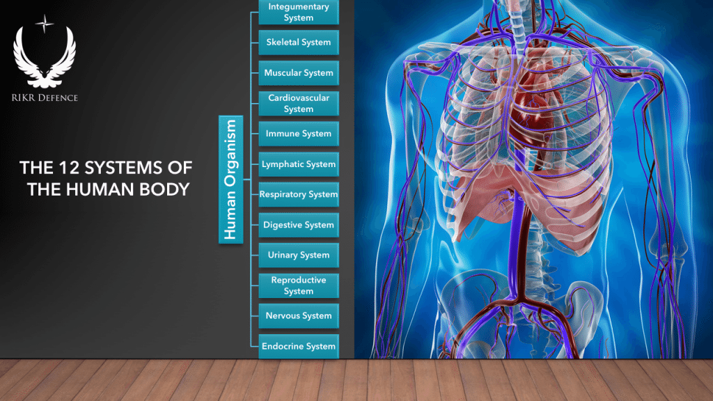 12-body-systems