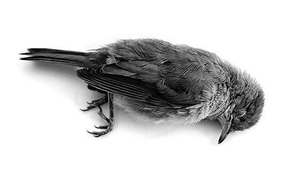 Dead-Bird