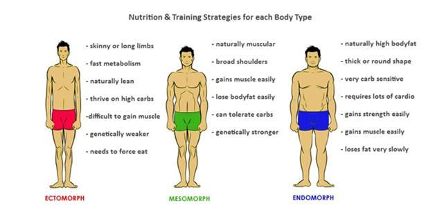 body type nutrition Here's a breakdown of what it takes for your body type to get the results you need and exactly what to eat and what supplements to take keep reading to find out exactly what to eat to ensure that you get results.