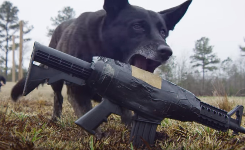 How To Train A Dog To Fetch Dog Training For Far Cry 5 Spotter Up
